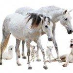 Tierhalterhaftpflichtversicherung